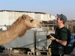 At the camel market