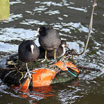Should we rename us the Stumbling Old Coots?